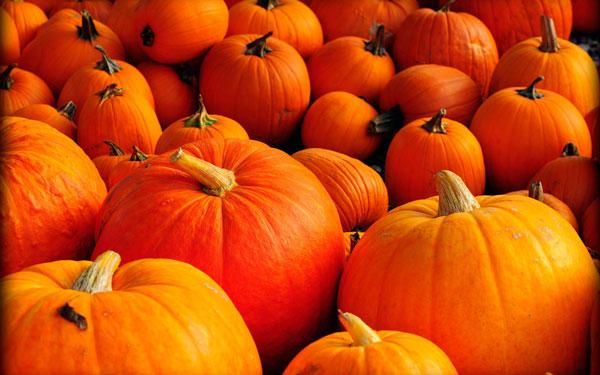 Balijepark - Halloween